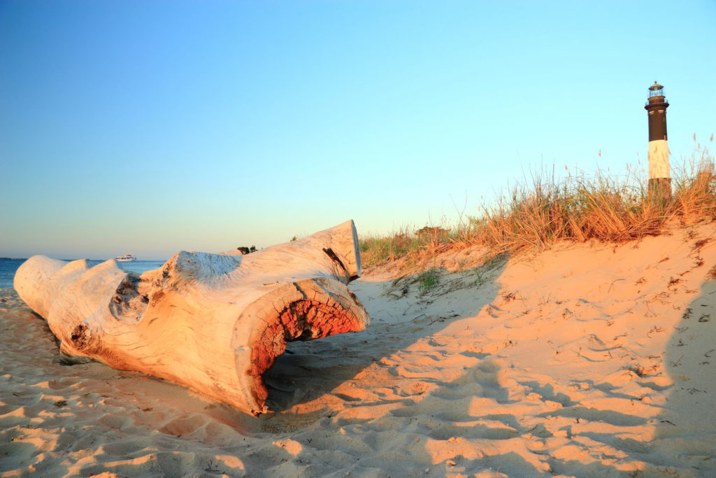 Log Washed up on the Beach with the Fire Island Lighthouse in the Distance.